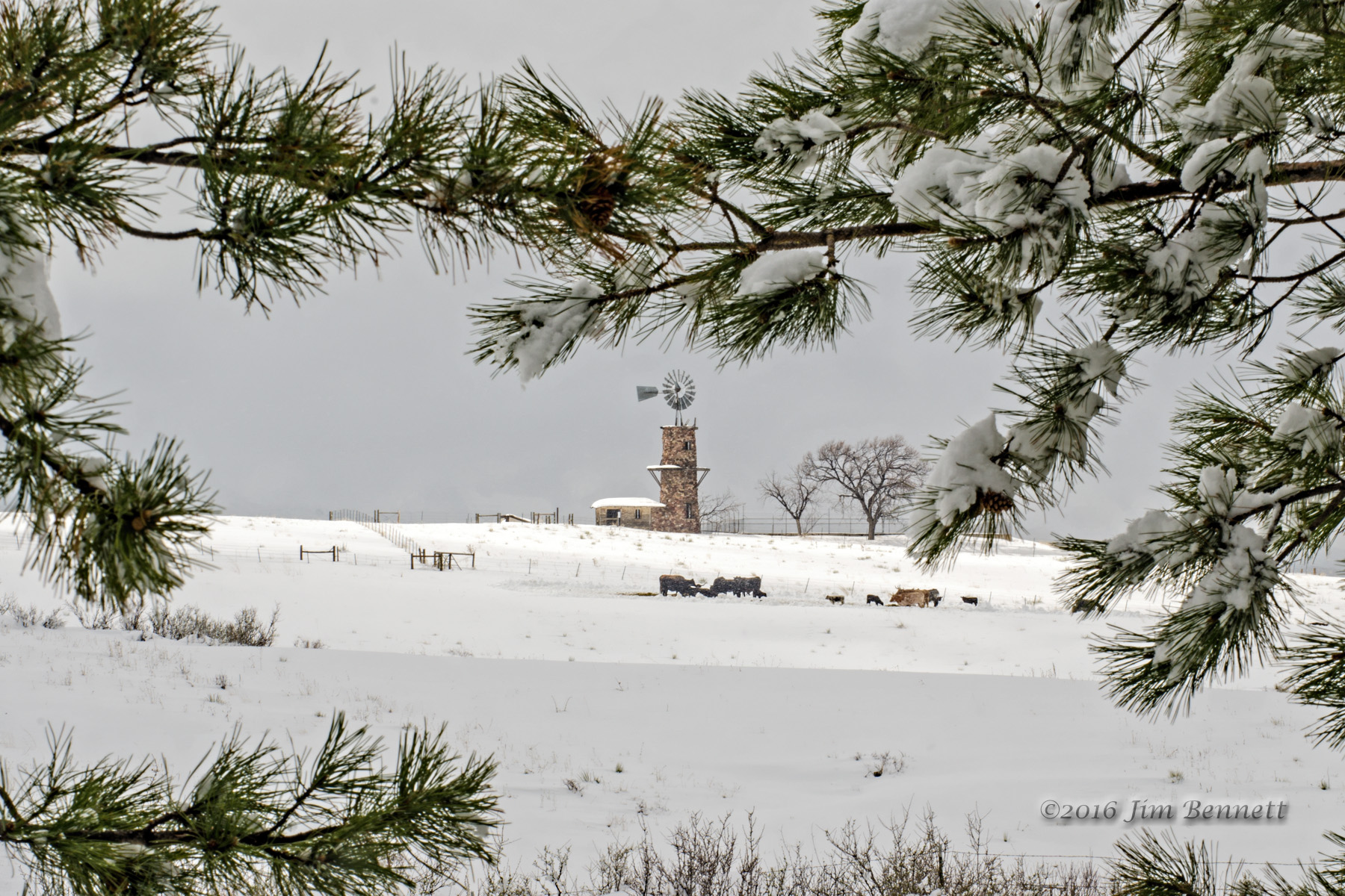 Highlands Ranch windmill after a spring snowstorm.